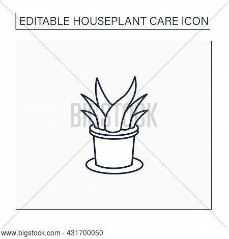 Aloe Vera Line Icon.perennial Evergreen Plant-xerophyte.used In Medicine, Perfumery And Cosmetology.
