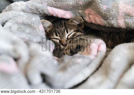 Catnap Habits. Cute Kitten Sleeping In Grey Soft Blanket. Cute Feline Friend. Cats Rest Napping On B