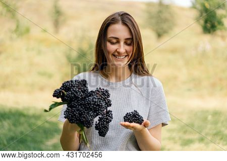 Girl Holds In Hands Clusters Fruit Black Elderberry. Sambucus . Black Elder. European Black Elderber