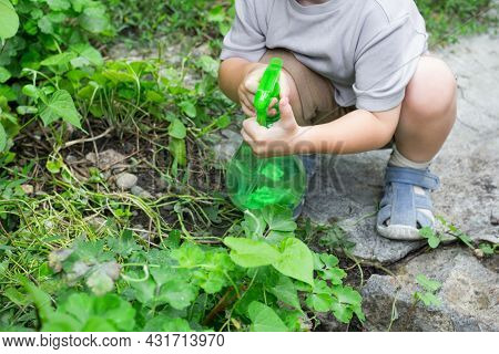 Toddler Looking After Flowers, Boy Sprinkles Plants With Spray Bottle. Child Watering In The Garden.