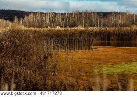 Contamination Of The Reservoir With Toxic Waste. An Oily Film On The Surface Of The Water. Man Poiso