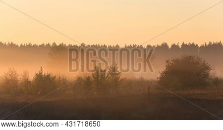 early morning landscape in forest. Foggy morning scene