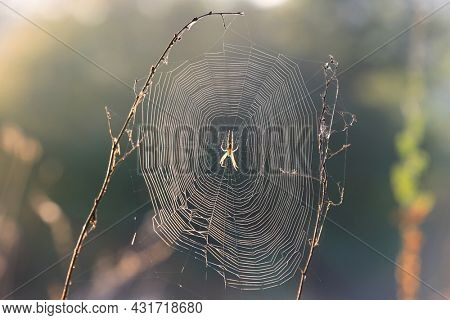 Spider web on grass in summer meadow