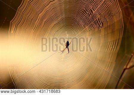 Spider on morning web in yellow warm sun light