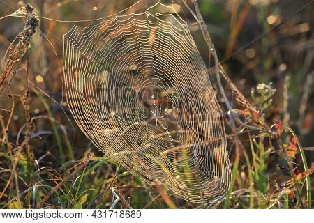 spider web among grass in summer steppe in mornung