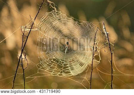 Spider web on summer meadow