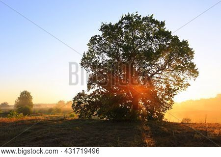 Nice morning landscape with alone big tree on meadow in sunrise light and mist