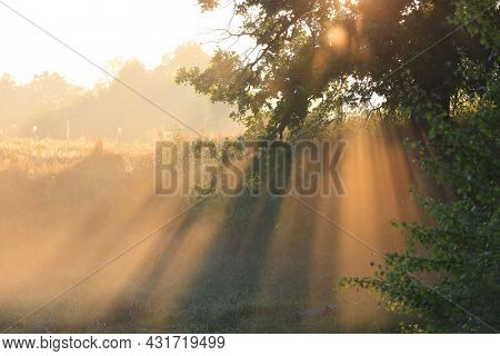 Morning sun light in forest. Bright sun rays flow through tree twigs. take it in Ukraine