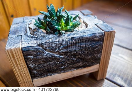 Haworthia Grows In A Pot On The Wooden Surface Of The Windowsill. Beautiful Green-brown Succulent Ho