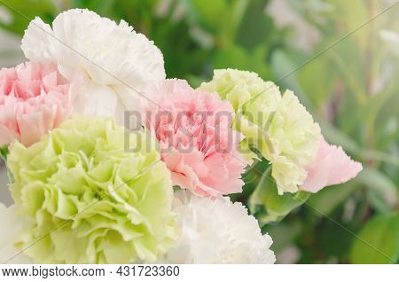 Close Up Photo Of A Pink, Light Green And White Carnation Bouquet Isolated Over Greenery Background