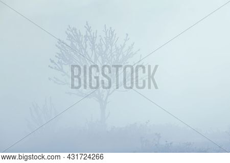 Completely Frozen Lonely Tree Standing In Extremely Thick Fog Caused By Sea Smoke Raising From The B