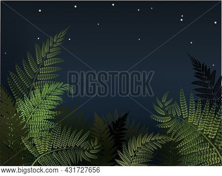Forest Fern With Night Sky Vector Illustration. New Zealand Fern Background.