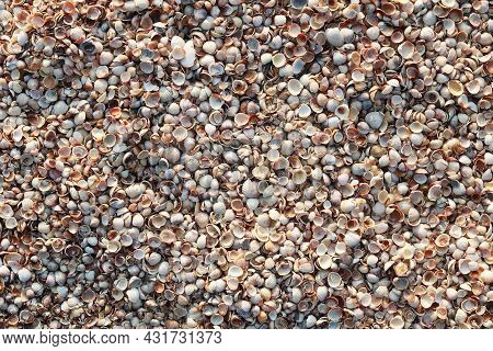 Summer Background Of Wet Seashells On Beach At Dawn In Soft Sunlight For Travel Advertisement Or Sum