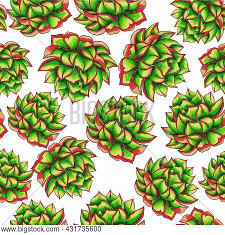 Succulents Flowers, Domestic Plant Grows In Pots And In Nature In The Desert Or In The Sand Stone Ro
