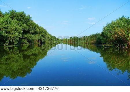 Boat trip in Danube Delta. Plants specific to the wetlands of Danube Delta in Romania, Biosphere Reserve, Europe