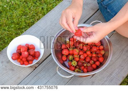 Strawberry Organic Breakfast. A Girl On A Green Lawn Prepares Strawberries From Her Garden For Break