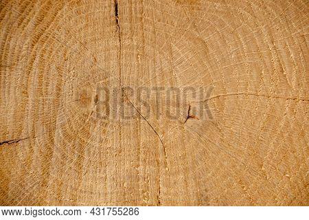 Wood Background. Oak Cut. Tree Rings. Close-up Cut Of An Oak Log.