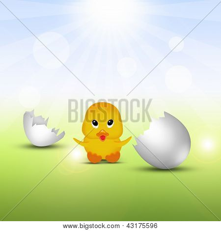 Cute Little Easter Chick