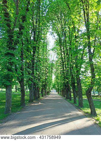 Beautiful Park With Nice Promenade Path And Big Green Trees