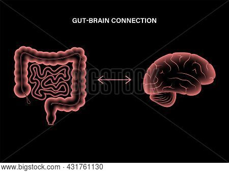 Gut Brain Connection And Microbiome. Enteric Nervous System In Human Body, Small And Large Intestine