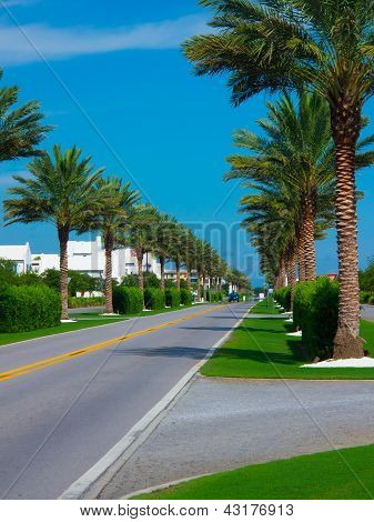road with palm trees