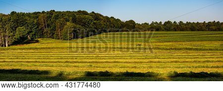 Strip Cropping On A Wisconsin Farm Field In August, Panoramic