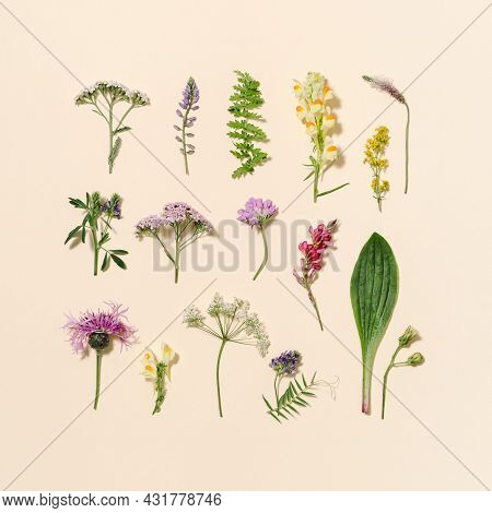 Minimal Natural Floral Background With Summer Wild Flower And Grass. Botanical Pattern From Differen