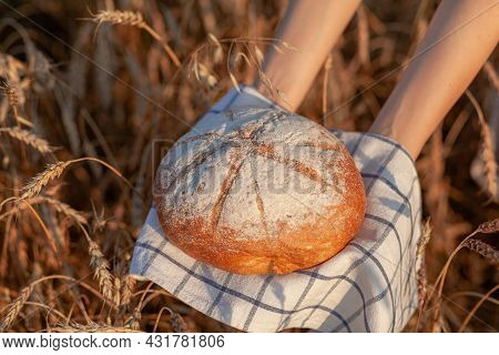 A Fresh Baked Loaf Of Bread In A Field Of Wheat Or Rye. A Woman Holds A Loaf Of Rye, Fresh Bread Aga