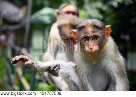 Animal Photography Monkey Sitting Macro Photography On A Green Background, Animal Photography, Wildl