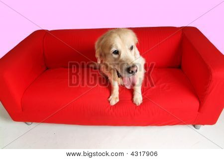 Dog And Sofa