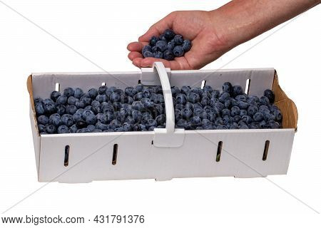 Closeup Of Fresh Blueberries Filled In A Paper Basket And A Male Hand With Blueberries Isolated On A