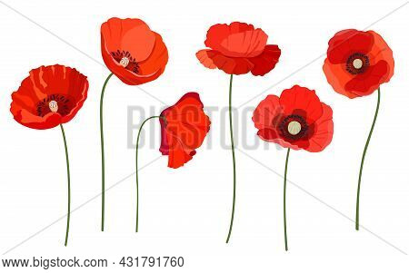 Set Of Beautiful Red Poppy Flowers. Wildflowers On A White Background. Vector Illustration
