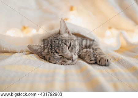 Cute Striped Tabby Kitten Sleeps On The Couch Covered With A White Knitted Blanket. Bright Glowing G