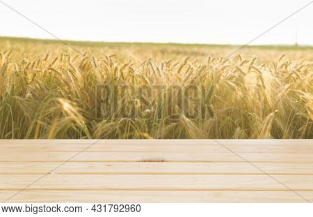 Wooden Board Table In Front Of Wheat Field On Sunset Light. Ready For Product Display Montages