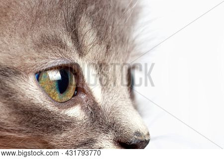 Cat Look. A Small Kitten Looks To The Side At The Place For Text On A White Background Close-up.