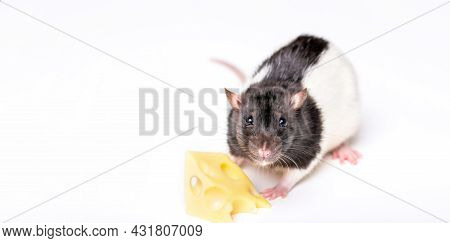 Little Mouse Trying To Move A Piece Of Cheese. Cheese And Mouse. Mouse With A Slice Of Swiss Cheese