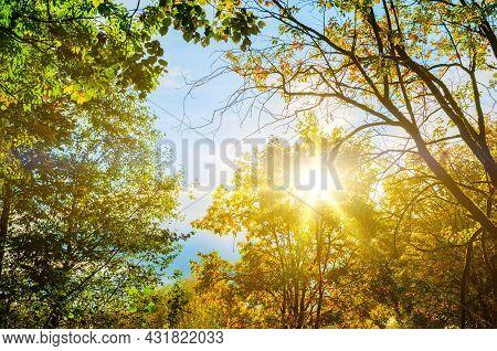 Autumn landscape, autumn tree tops against blue sky, autumn forest trees in sunny autumn weather. Autumn landscape, autumn trees, autumn forest, autumn park trees, autumn background, autumn sunset view