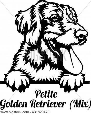 Petite Golden Retriever Mix Peeking Dog - Head Isolated On White