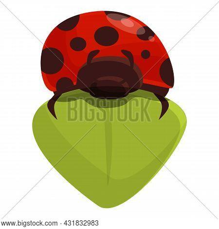 Leaf Ladybird Icon Cartoon Vector. Ladybug Spring. Bug Insect