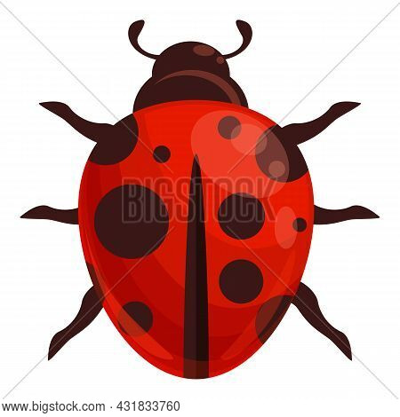 Ladybug Insect Icon Cartoon Vector. Spring Bug. Forest Beetle