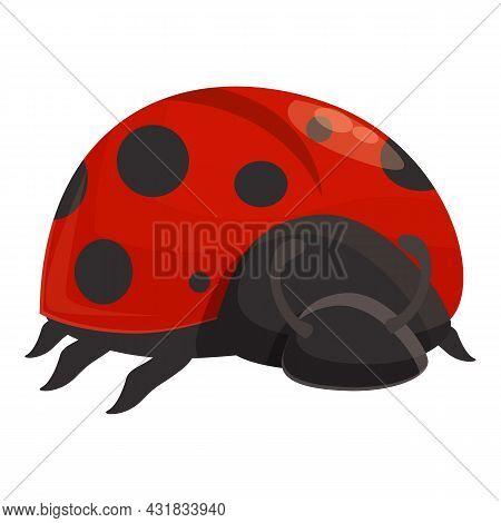 Summer Ladybug Icon Cartoon Vector. Ladybird Bug. Beetle Insect