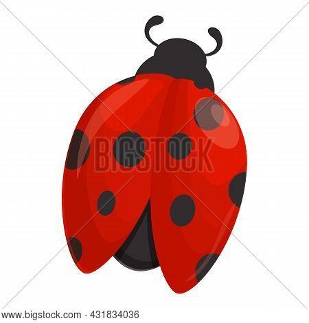 Spring Ladybird Icon Cartoon Vector. Ladybug Insect. Summer Beetle