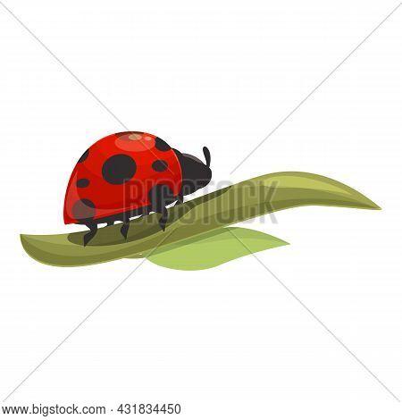 Leaf Ladybug Icon Cartoon Vector. Ladybird Spring. Summer Beetle