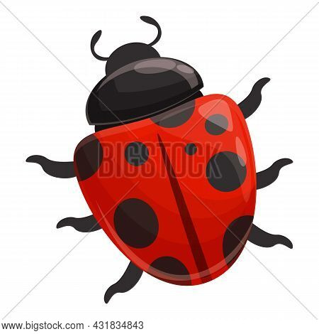 Ladybug Insect Icon Cartoon Vector. Flower Bug. Spring Beetle