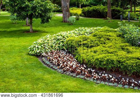 Garden Bed In Park With Plants Deciduous Flowers And Evergreen Bush In Flower Bed Near Green Grass W