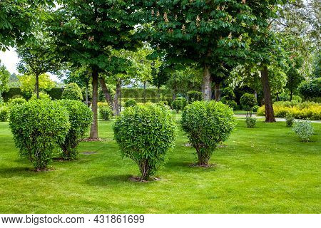 Green Deciduous Bush In Backyard Garden Bed, Landscaped Park With Chestnut Tree Trunk And Plants Mea