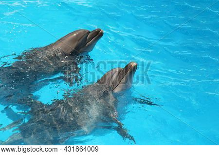 Dolphins Swimming In Pool At Marine Mammal Park