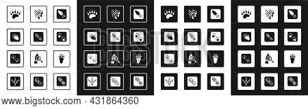 Set Human Footprints Shoes, Alligator Crocodile, Bear Paw, Paw, Mop, And Dove Icon. Vector
