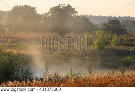 early morning foggy meadow in forest. Take it in Ukraine.