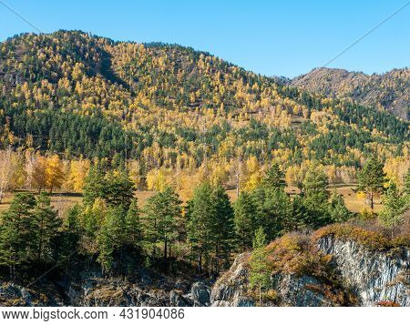 Autumn View Of The Altai Mountains Against The Blue Sky. Chemal, Altai Republic, Russia.